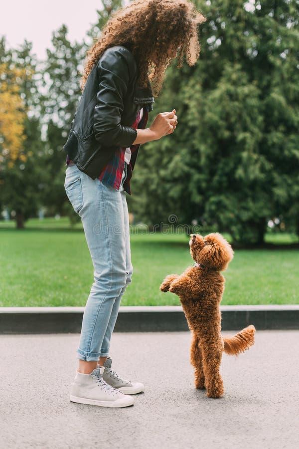 Vrouw die haar poedelhond in park opleiden royalty-vrije stock foto's