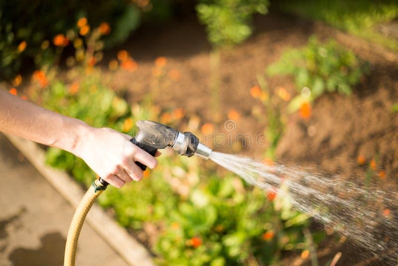 Vrouw die haar tuin gieten royalty-vrije stock foto