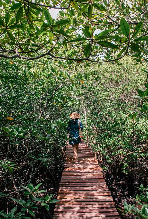 Vrouw die langs de houten brug van Koh Tean in weelderige natuurlijke mangrov lopen stock fotografie