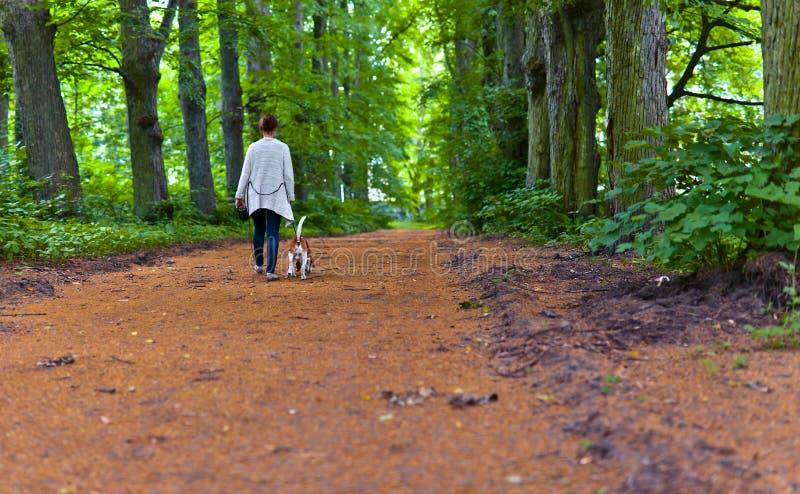 Vrouw die met brak in het park lopen stock afbeelding