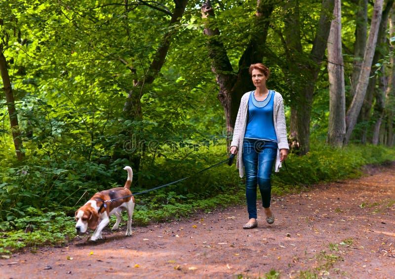 Vrouw die met brak in het park lopen royalty-vrije stock fotografie