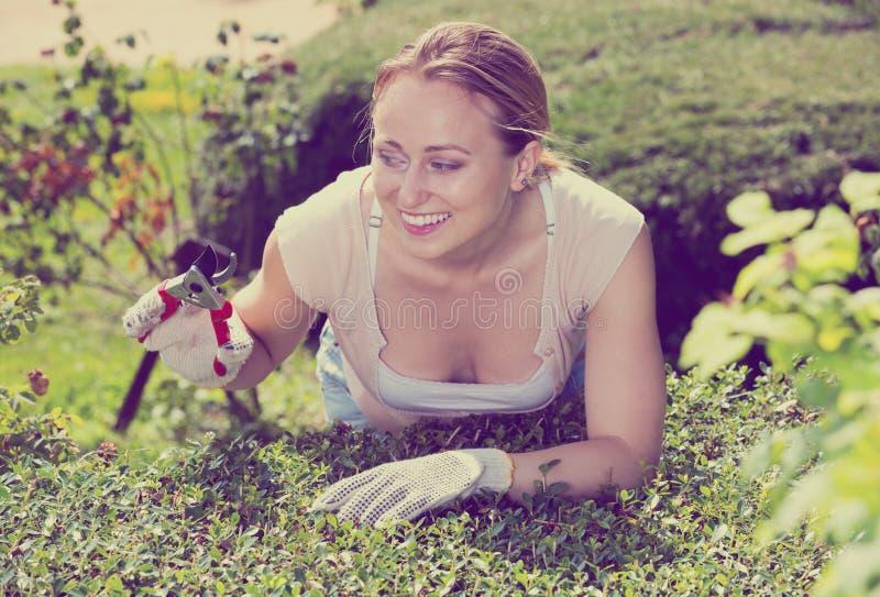 Vrouw die met groene struik werken die tuinbouwhulpmiddelen met behulp van stock fotografie