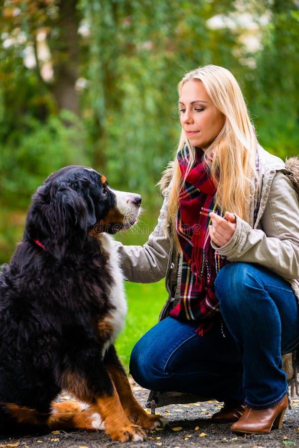 Vrouw die met hond in dalingspark lopen royalty-vrije stock fotografie