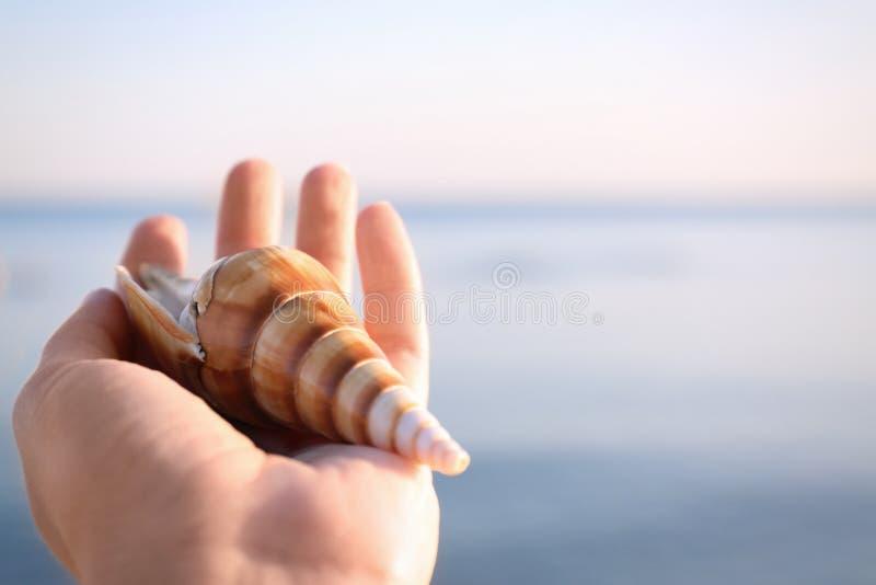 Vrouw die mooie shell op strand houden dichtbij overzees, close-up royalty-vrije stock foto's