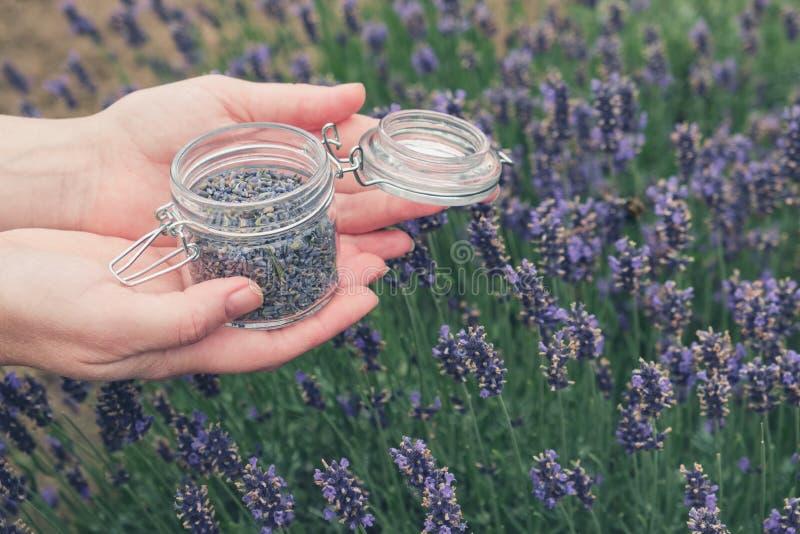 Vrouw die open glaskruik van lavendelbloemen houden Lavendelgebied op achtergrond royalty-vrije stock afbeeldingen