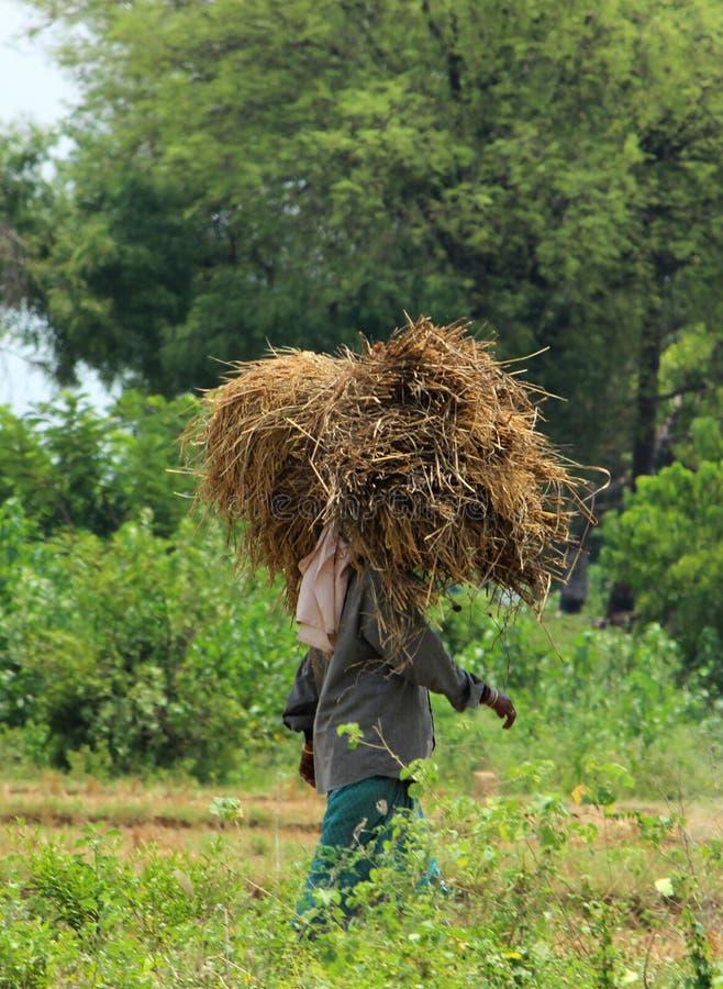 Vrouw die Straw Bundle vervoeren stock fotografie