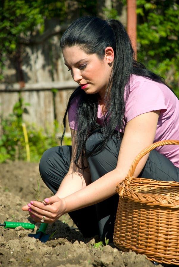 Vrouw die in tuin plant royalty-vrije stock fotografie