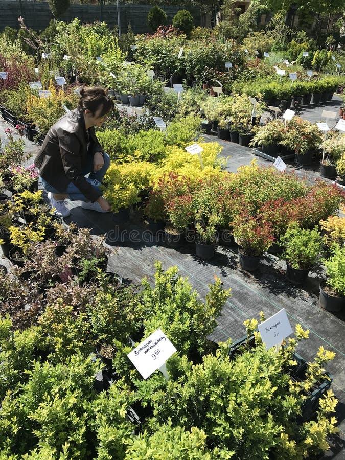 Vrouw die voor nieuwe installaties en bloemen bij het tuinieren en installaties openluchtverkoper winkelen royalty-vrije stock afbeelding