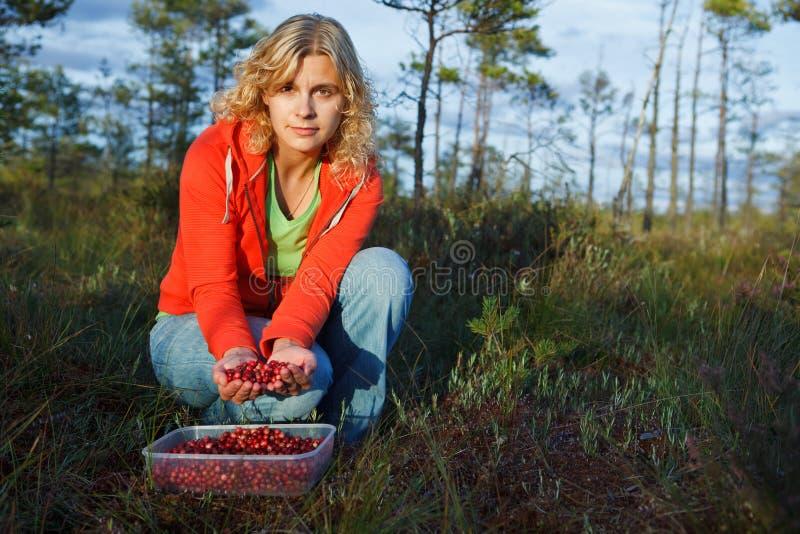 Vrouw die wilde organische Amerikaanse veenbessen plukt royalty-vrije stock afbeeldingen