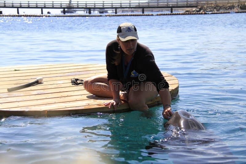 Vrouw en dolfijn in een water stock afbeeldingen
