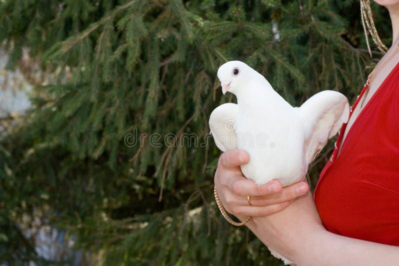 Vrouw en duif. stock fotografie