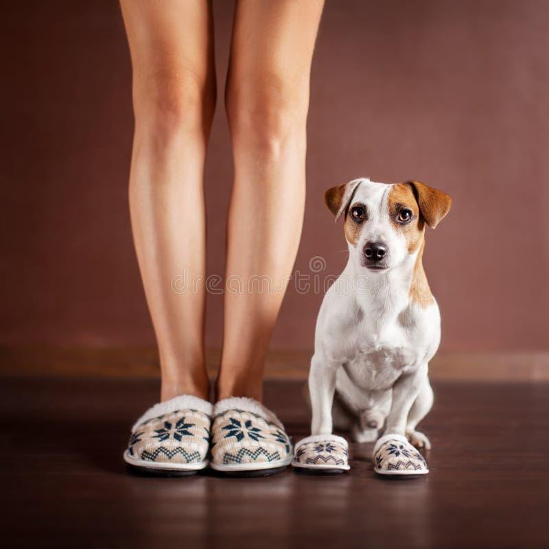 Vrouw en een hond in pantoffels royalty-vrije stock foto's