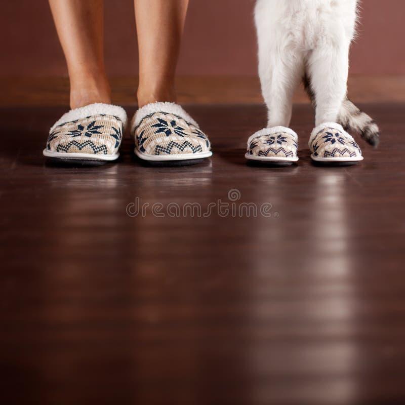 Vrouw en een kat in pantoffels royalty-vrije stock afbeelding