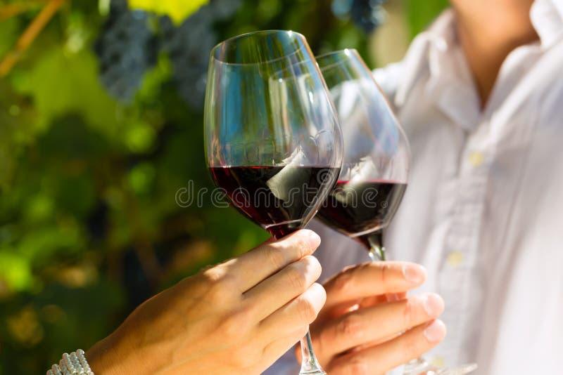 Vrouw en man in wijngaard het drinken wijn stock foto's
