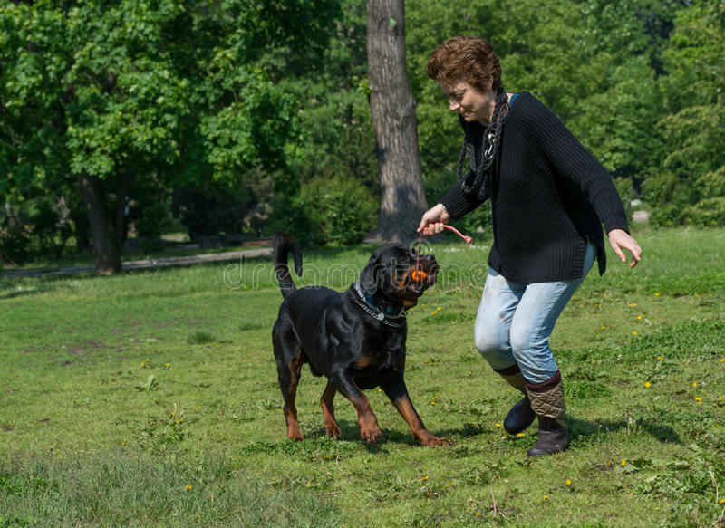 Vrouw en Rottweiler-het spelen bij park royalty-vrije stock fotografie