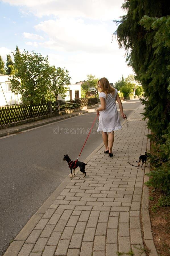 Vrouw en twee kleine honden. stock afbeelding
