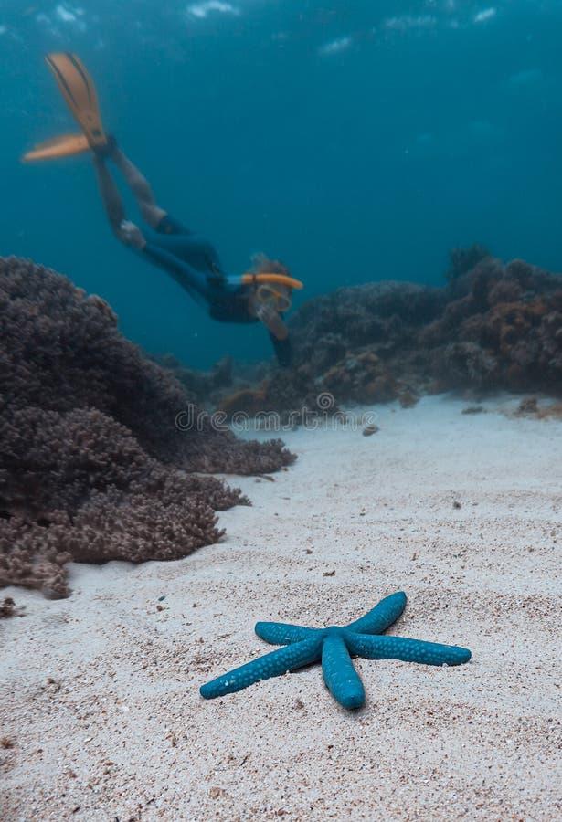 Vrouw Freediver stock afbeeldingen