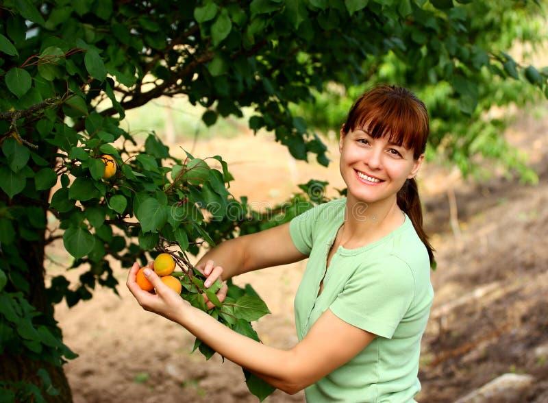 Vrouw in fruittuin stock afbeelding
