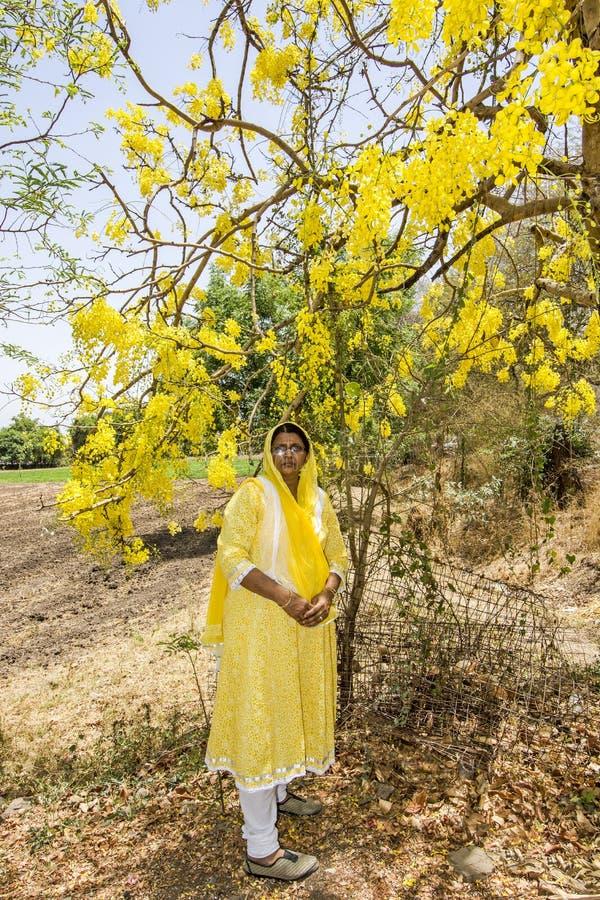 vrouw in gele kleding bij kassieboompeulen die van de de Doucheboom van kassieboom de Zuiverende cassi Gouden van de het Laburnum royalty-vrije stock afbeelding