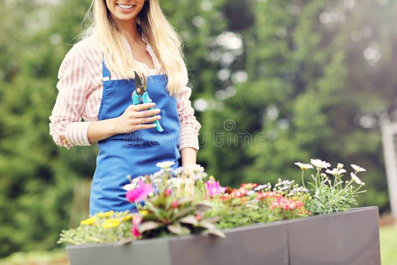 Vrouw het groeien bloemen buiten in de zomer stock foto