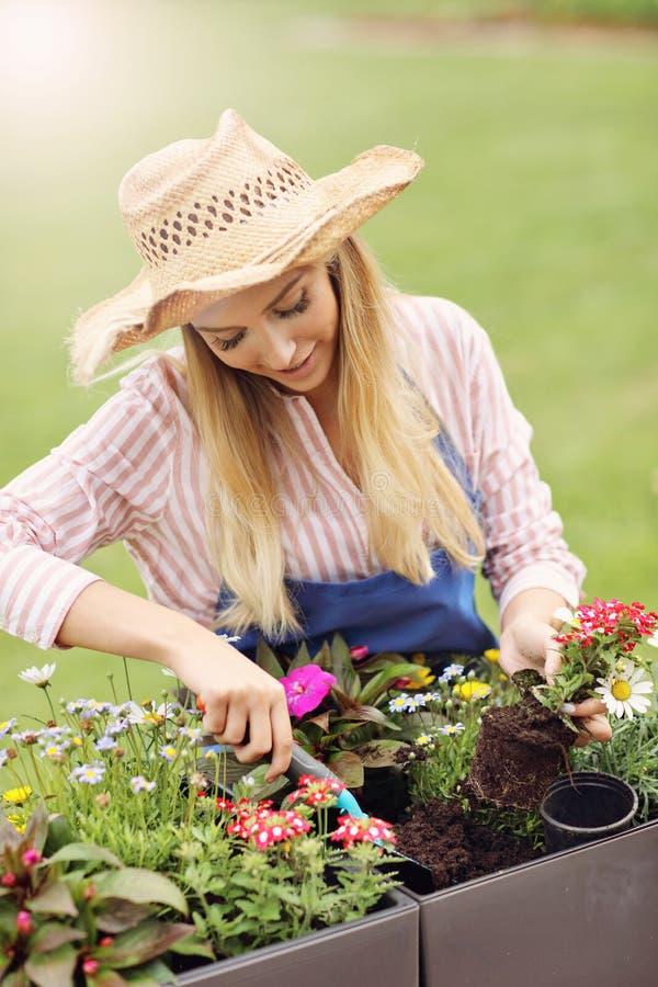 Vrouw het groeien bloemen buiten in de zomer royalty-vrije stock afbeeldingen