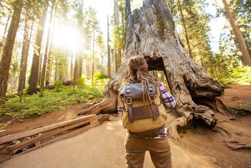 Vrouw in het nationale park van Yosimite dichtbij sequoia in Californië, de V.S. stock fotografie