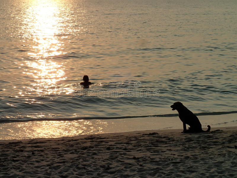 Vrouw in het overzees en hond op het strand bij zonsondergang stock foto
