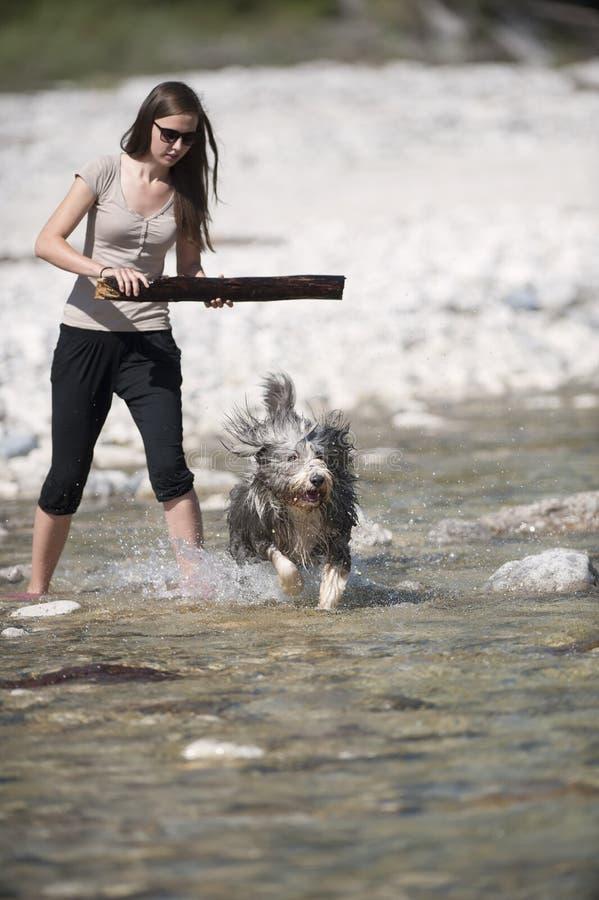 Vrouw het spelen met haar gebaarde colliehond in water royalty-vrije stock afbeeldingen