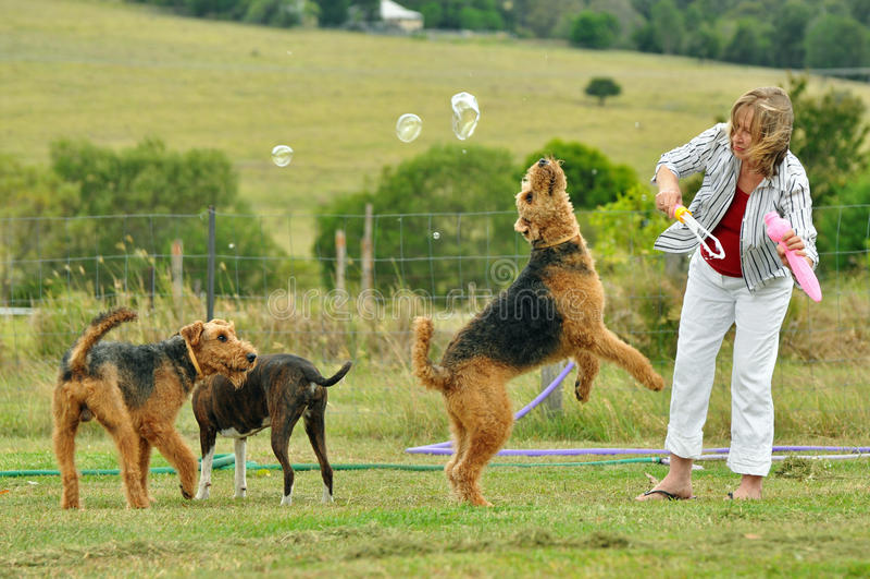 Vrouw het spelen met haar grote honden van huisdierenairedale Terrier in openlucht royalty-vrije stock foto's
