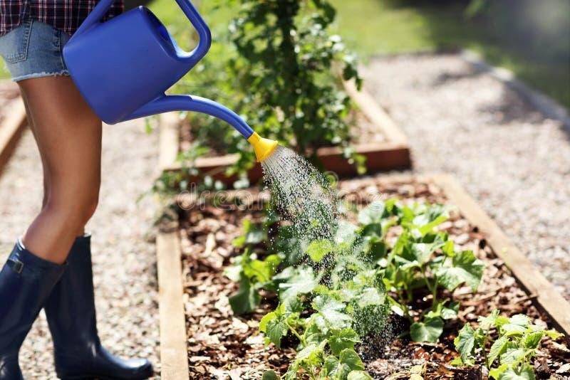 Vrouw het water geven installaties buiten in de zomer stock fotografie