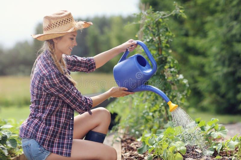 Vrouw het water geven installaties buiten in de zomer stock afbeelding
