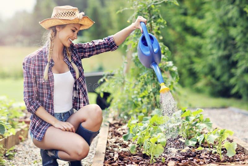 Vrouw het water geven installaties buiten in de zomer royalty-vrije stock fotografie