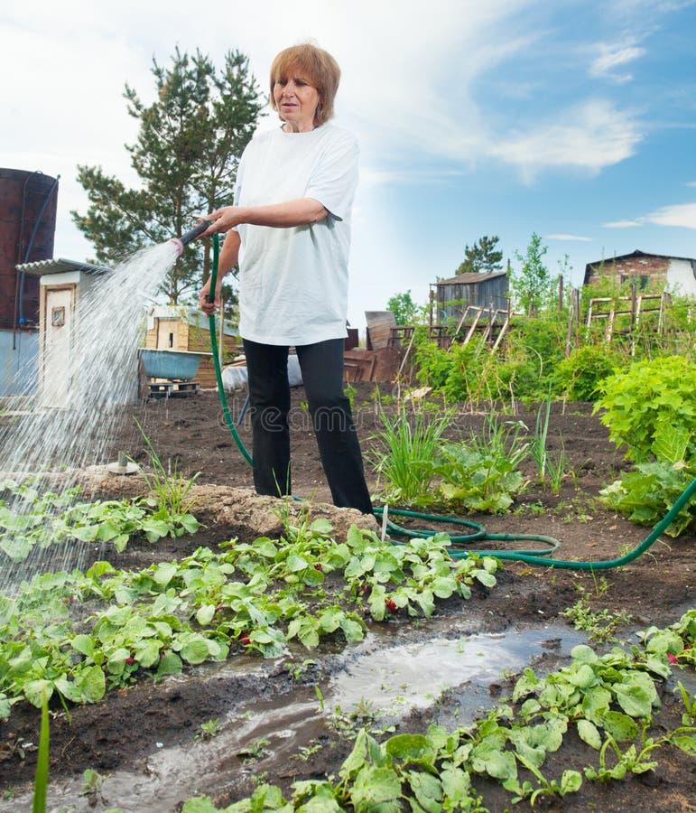 Vrouw het water geven tuinbedden royalty-vrije stock afbeeldingen