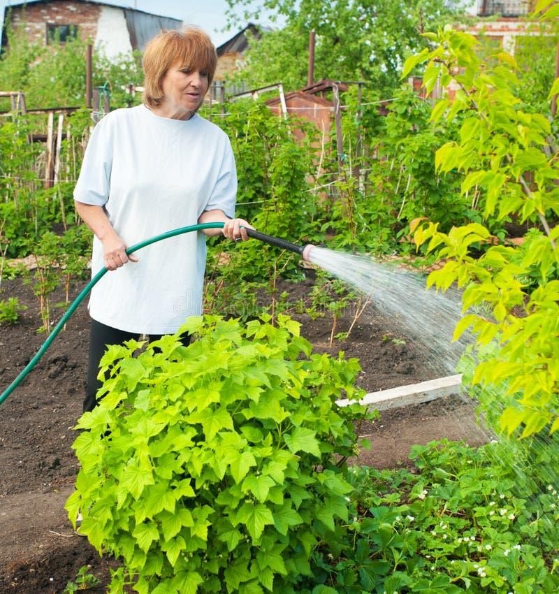 Vrouw het water geven tuinbedden royalty-vrije stock afbeelding