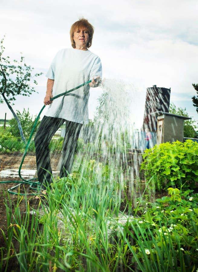 Vrouw het water geven tuinbedden royalty-vrije stock fotografie