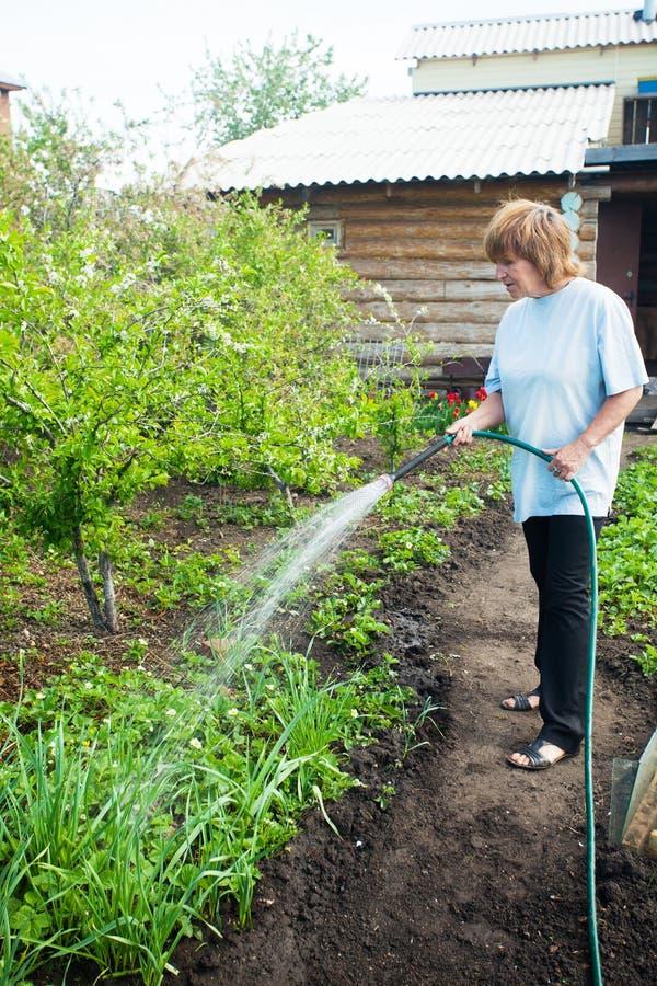 Vrouw het water geven tuinbedden stock afbeelding