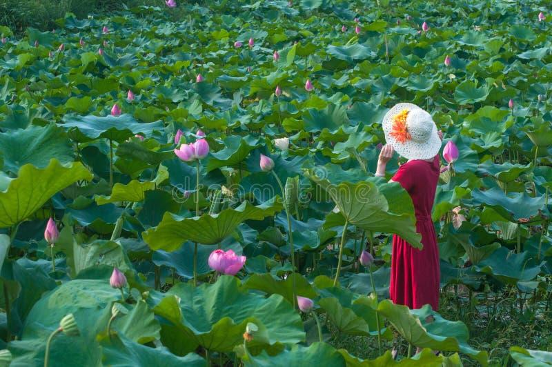 Vrouw in lotusbloemvijver royalty-vrije stock foto