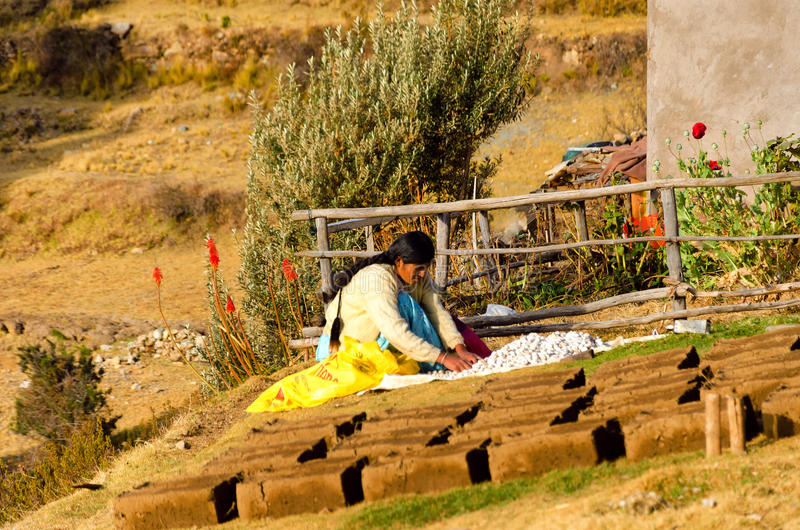 Vrouw met Aardappels in Bolivië royalty-vrije stock foto
