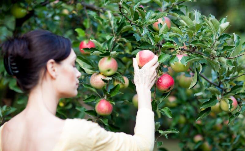 Vrouw met appelboom stock afbeeldingen