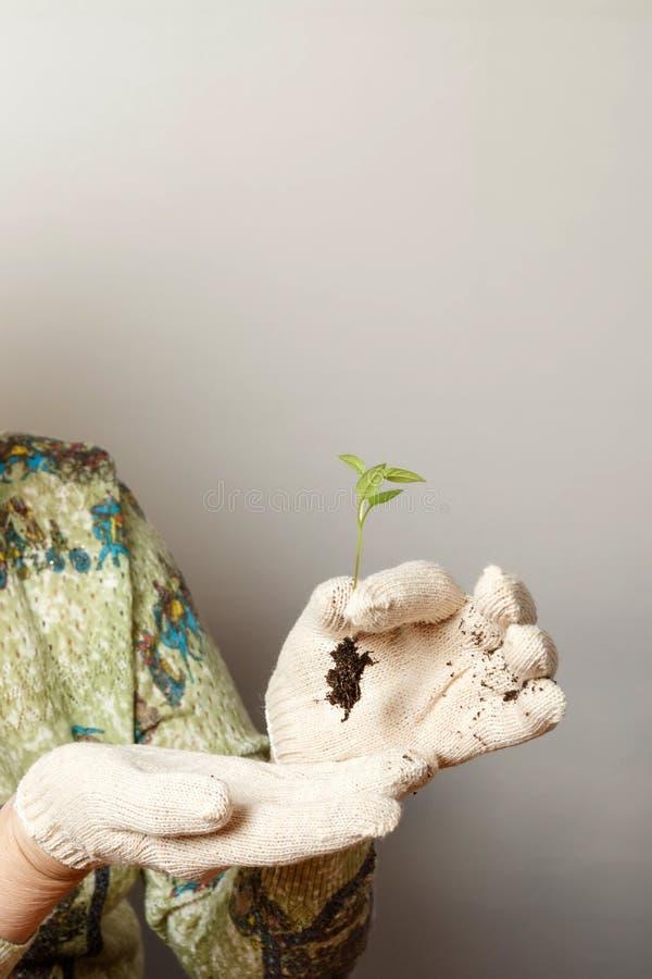 Vrouw met een kiem peper royalty-vrije stock afbeeldingen