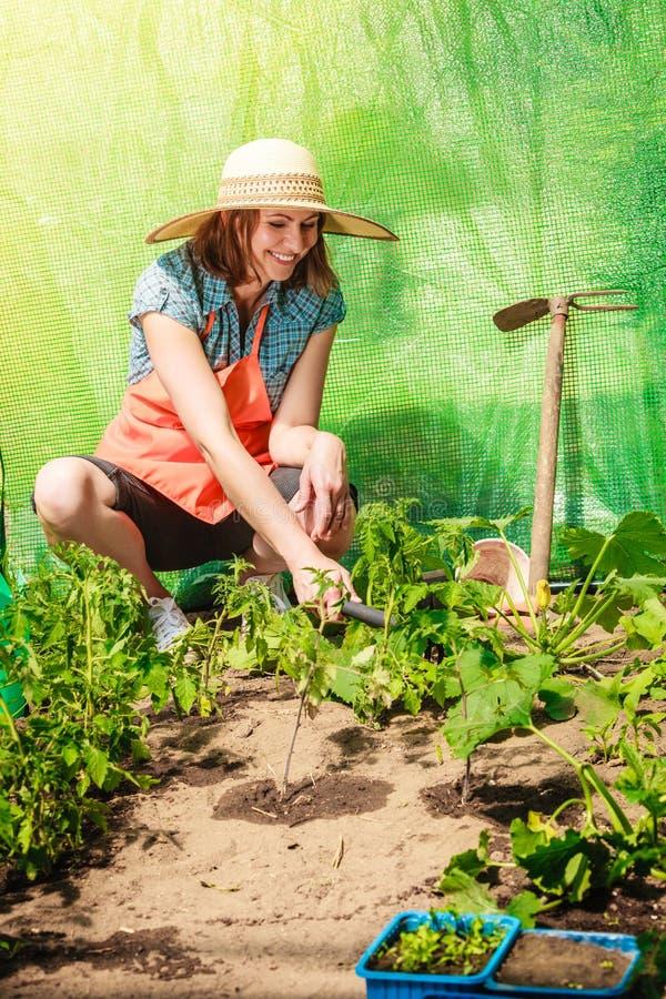 Vrouw met het tuinieren hulpmiddel die in serre werken stock fotografie