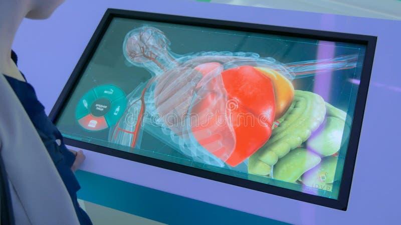 Vrouw met interactief touchscreen-beeldscherm stock afbeeldingen