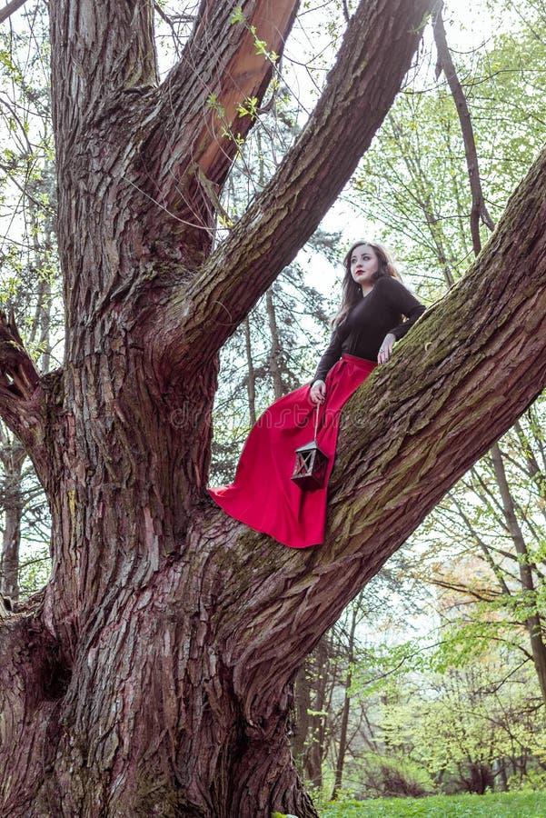 Vrouw met lantaarn op boom stock afbeeldingen