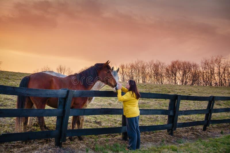 Vrouw met paarden stock foto's