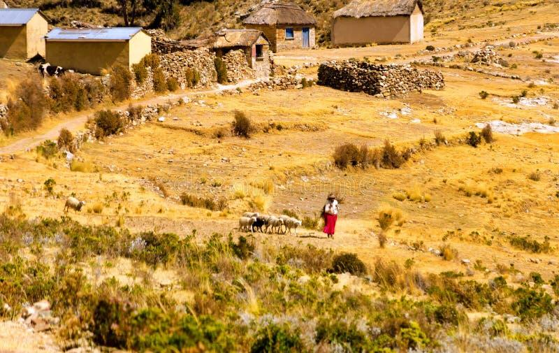 Vrouw met schapen stock afbeeldingen