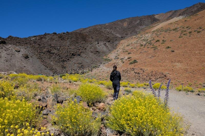 Vrouw op droog vulkanisch die berglandschap door gele bloemen wordt omringd stock afbeelding