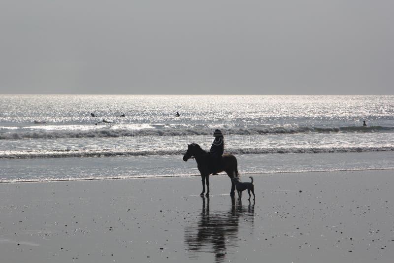 Vrouw op paard en hond op het strand royalty-vrije stock afbeeldingen