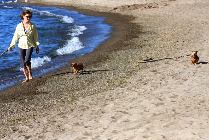 Vrouw op Strand met Honden royalty-vrije stock fotografie