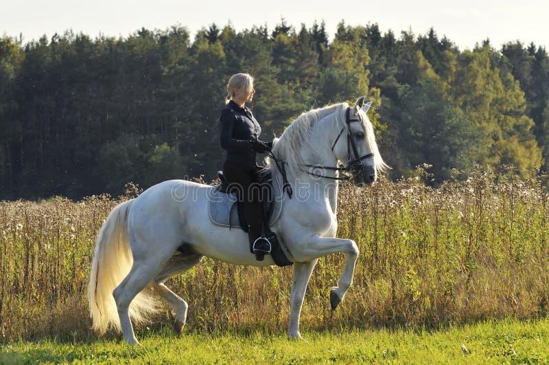 Vrouw op wit paard royalty-vrije stock afbeelding