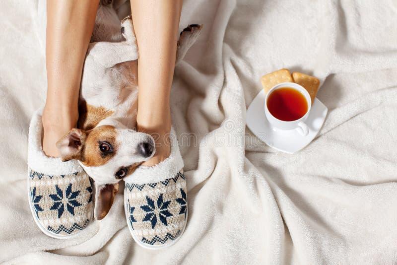Vrouw in pantoffels met hond stock afbeelding
